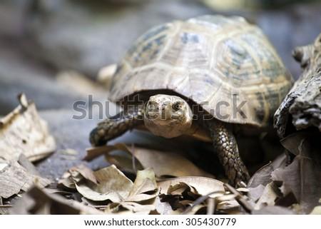 a single turtle watching - stock photo