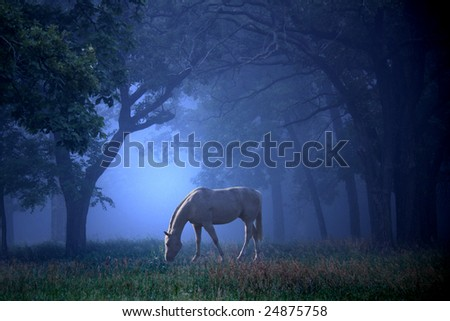 A single white horse grazing in a beautiful foggy blue woods. - stock photo