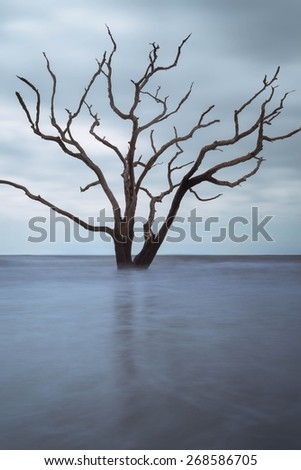 A skeleton tree sits firm in the middle of the ocean at high tide at Botany Bay Beach Boneyard on Edisto Island, South Carolina. - stock photo