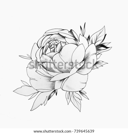A sketch of a beautiful rose bud on a white background.