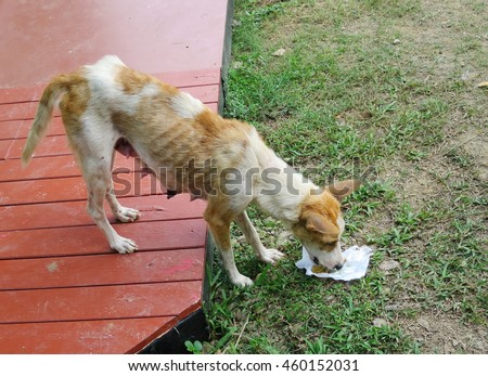 A skinny dog eating food, she is good mother with four fat baby dogs.