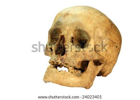 a skull of an shemale person isolated over white