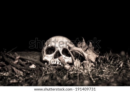 A skull on the ground in the woods; photographed in the dark using light painting - stock photo