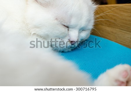 a sleeping cat on the chair - stock photo