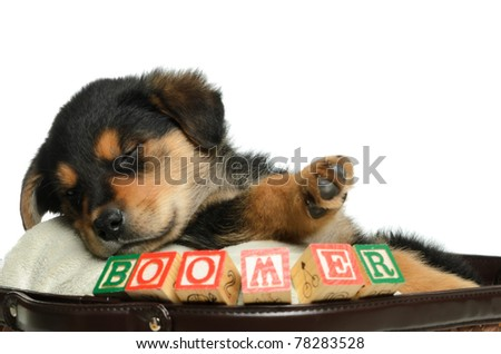 A sleeping puppy is having a nap in a basket, shot with his name spelled using alphabet blocks. - stock photo