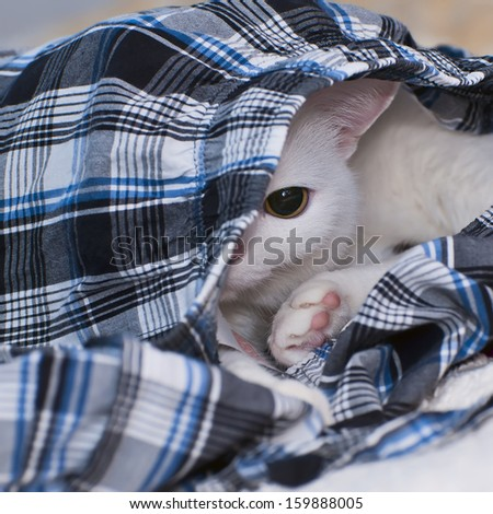 a sleeping white cat hiding in clothes - stock photo