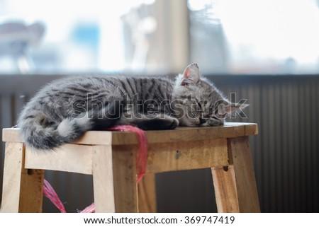 A sleepy of Little gray kitten ,selective focus. - stock photo