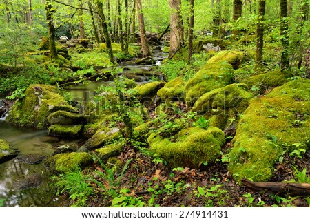 A slow moving stream reflects the lush trees and forest in verdant woods. - stock photo