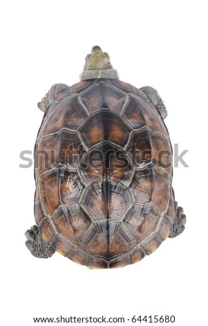 a slow moving tortoise isolated on white - stock photo