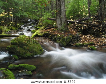 A slow shutter blend of a small creek with cedar trees and moss.