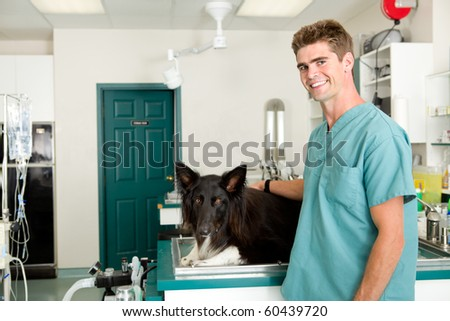 A small animal clinic with a dog on the surgery prep table - stock photo