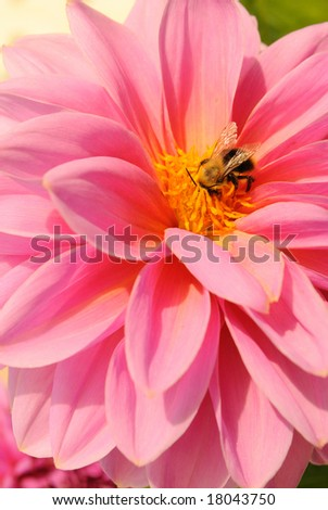 A small bee on the flower - stock photo