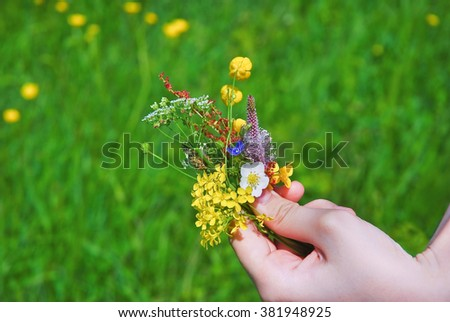A small bouquet of wildflowers in a child's hand for mom
