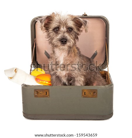 A small breed dog in a travel case packed with bones and toys ready to go on a trip