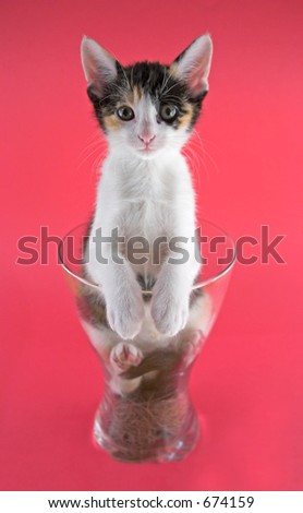 A small cat inside a vase over a pink background. - stock photo