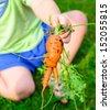 A small child holding a freshly picked strangely shaped carrot - stock photo
