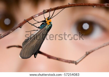 A small child looking at a moth resting on a branch - stock photo