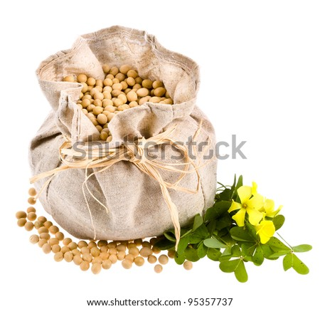 A small cloth bag with soybeans - stock photo
