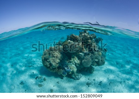 A small coral bommie grows on a shallow sand flat near the south Pacific island of Aitutake in the Cook Islands. - stock photo