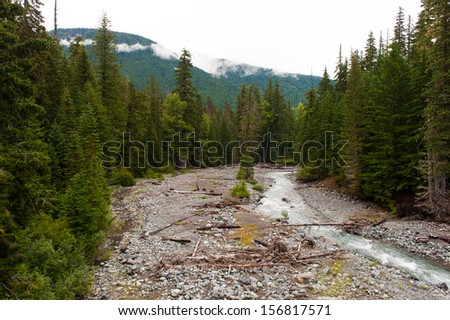 A small creek surrounded by very tall trees in Washington, USA - stock photo
