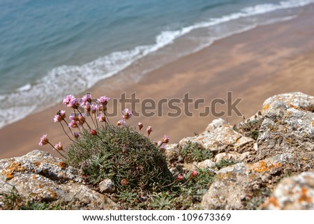 A small deserted beach with flowers in the foreground - stock photo