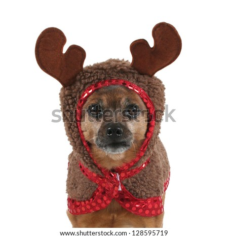 a small dog dressed up as a reindeer