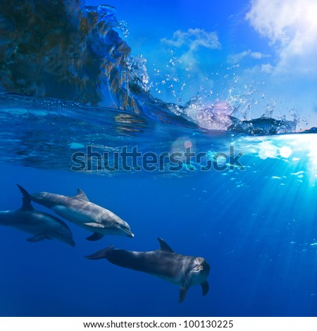 A small flock of dolphins playing in sunrays underwater underneath of breaking wave - stock photo