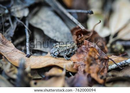 Everglades: Pig Frog | WILD TV | English Language Arts and ...