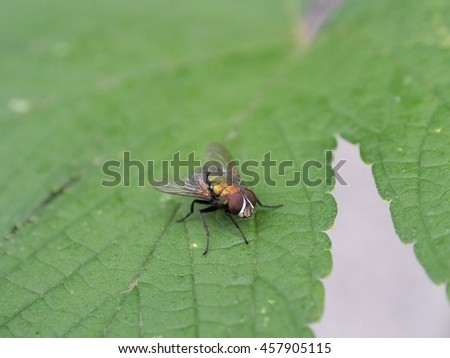 A small fly perching on leaves - stock photo