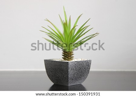 A small green plant for home decoration - stock photo