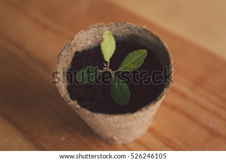 A small green plant in a flower pot.