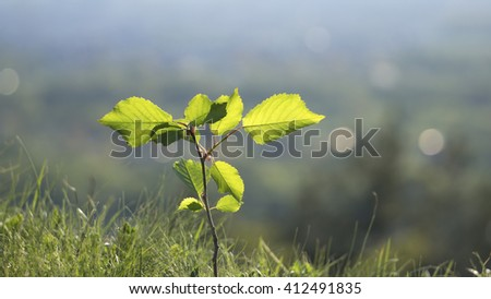 A small, green tree on nature background - stock photo
