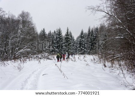 A small group of tourists goes through a snow-covered winter forest on a cloudy day.