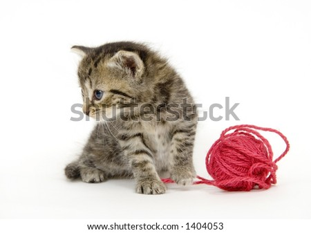 A small kitten looks to the side on a white background. This kitten is being raised on a farm in central Illinois - stock photo