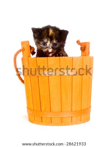 A small kitten peeks out of the top of an orange barrel - stock photo