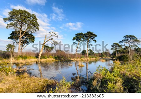 A small lake in Ramsdown Forest just outside of Bournemouth. - stock photo