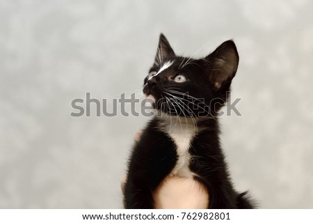 A small, mongrel black kitten with a white breast.