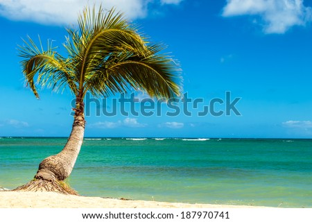 A small palm tree at the shoreline of the beach in Hawaii - stock photo