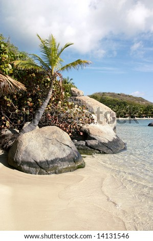 A small palm tree growing out of a granite boulder on a sandy beach.