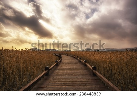 A small pathway in Suncheon wetlands. - stock photo