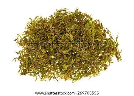 A small pile of floral moss used for flower arrangements. - stock photo