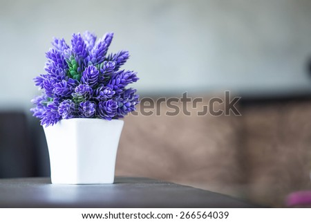 A small plant  - stock photo
