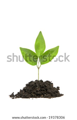 A small plant in a mound of dirt in the studio