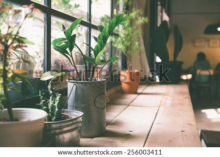 A small plant pot displayed in the window vintage color - stock photo