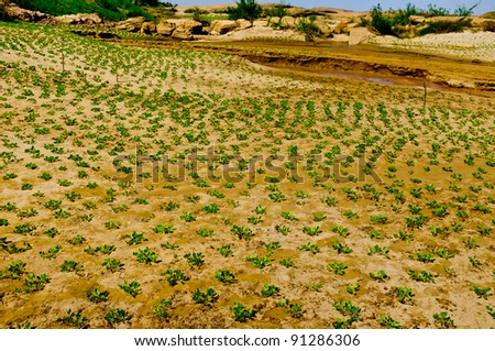 A small plantation of trees in the ground - stock photo