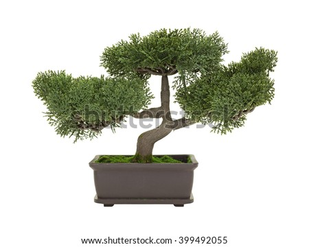 A small plastic bonsai tree isolated on a white background.