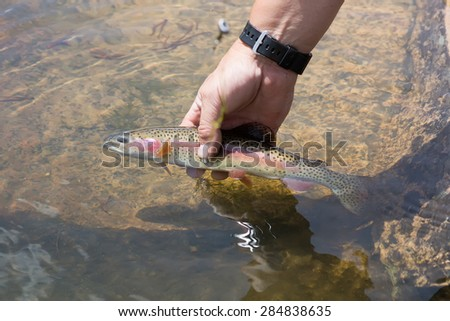 A small rainbow trout in a hand - stock photo