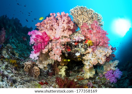 A small reef formation in Fiji with multicolored soft corals and a bright ball of sunshine off to the right. - stock photo