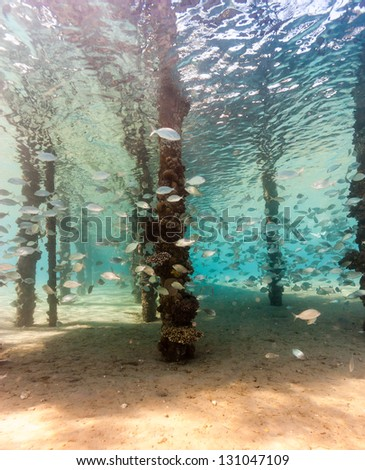 A small shoal of fish around the legs of a manmade jetty - stock photo