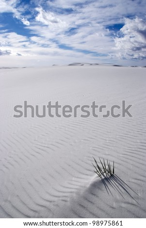 A small soapweed yucca buried in Rippled white sand in White Sands National Monument  New Mexico, USA - stock photo